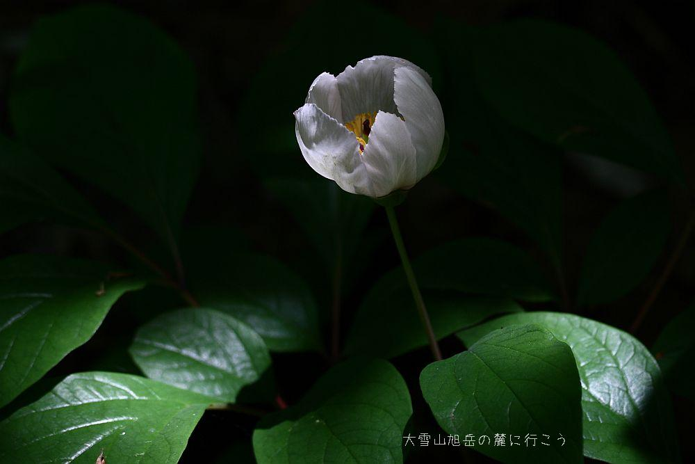 H.Ochi