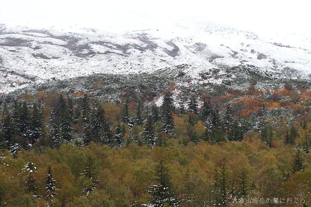 大雪山旭岳の麓に行こう